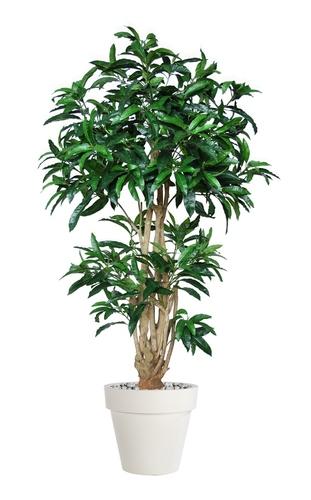 Mango Malabar 180 cm Green